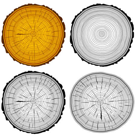 annual ring annual ring: Set tree rings saw cut tree trunk background. Vector illustration. Illustration