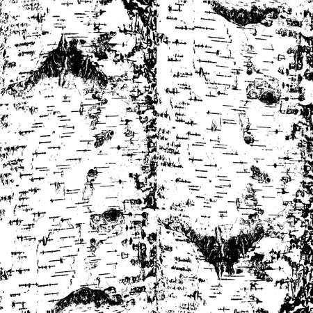 rinds: bark of birch in the cracks texture. Vector illustration. Illustration