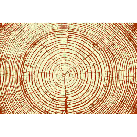 rings on a tree cut: Tree rings saw cut tree trunk background. Vector illustration.