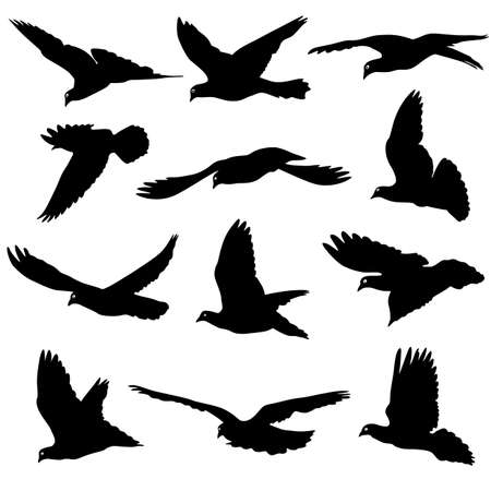 paloma: El concepto de amor o la paz. Conjunto de siluetas de palomas. Ilustraci�n del vector.