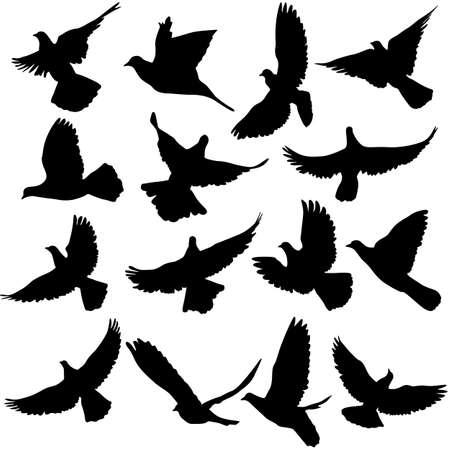 palomas volando: El concepto de amor o la paz. Conjunto de siluetas de palomas. Ilustración del vector.
