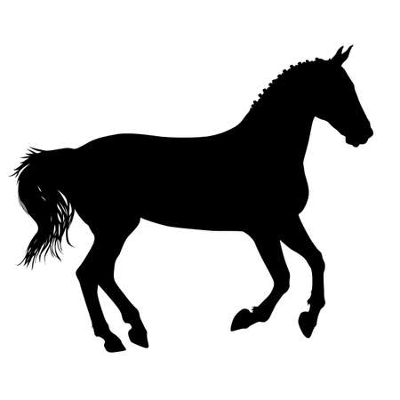 thoroughbred horse: silhouette of black mustang horse vector illustration