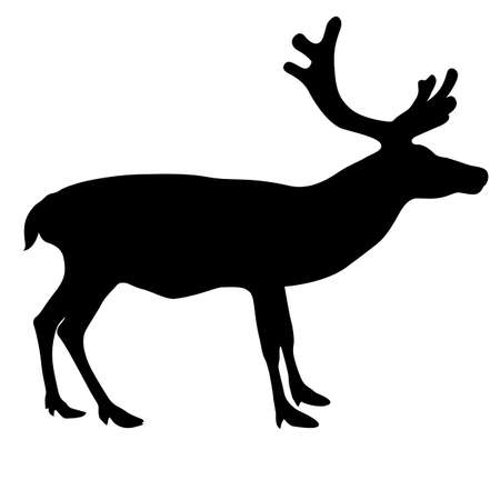 antler: Silhouette deer with great antler on white background. Vector illustration.