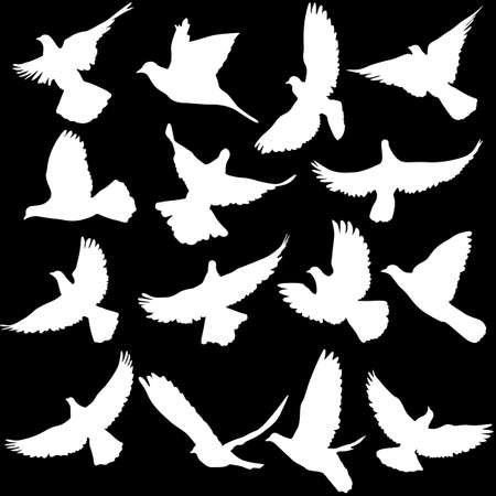 black and white line drawing: Concept of love or peace. Set of silhouettes of doves. Vector illustration.