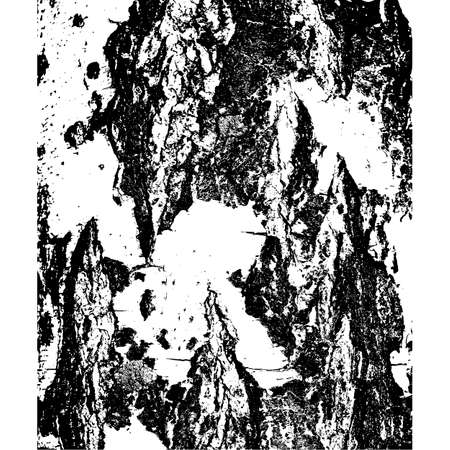 birch bark: Bark of birch in the cracks texture. Vector illustration.