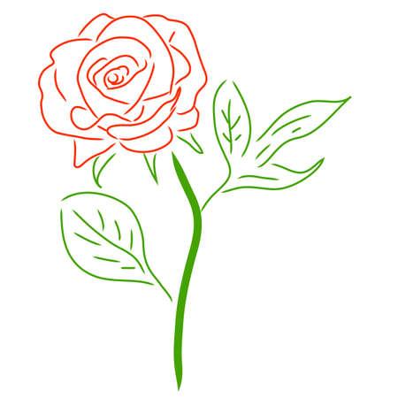 Red Rose isoliert auf weiß, Vektor-Illustration. Standard-Bild - 52825708