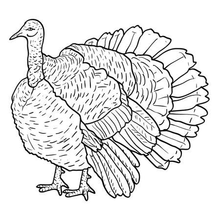 Sketch black turkey on a white background. Vector illustration