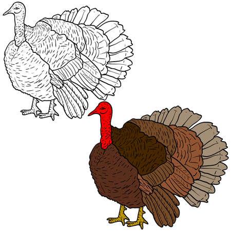 Sketch black turkey on a white background. Illustration