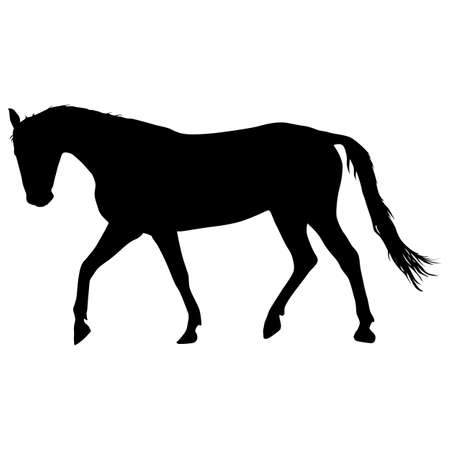 mustang horse: silhouette of black mustang horse vector illustration.