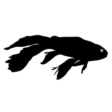 Black silhouette of aquarium fish on white background.