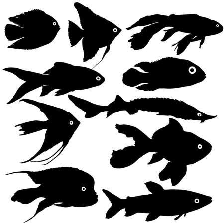Black set silhouette of aquarium fish on white background.