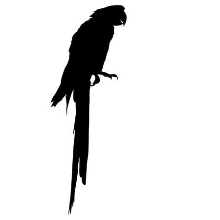 Silhouette bird Macaws on a white background.