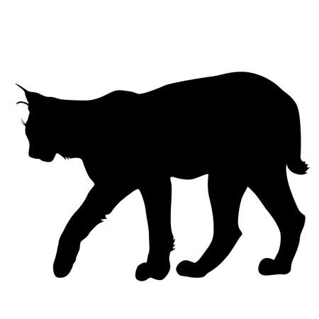 Silhouette of the Lynx on a white background. 일러스트