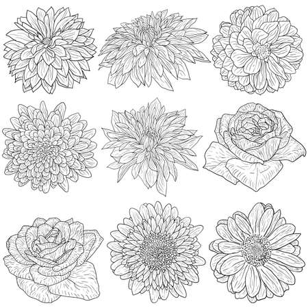 Beautiful monochrome sketch, black and white flower isolated.