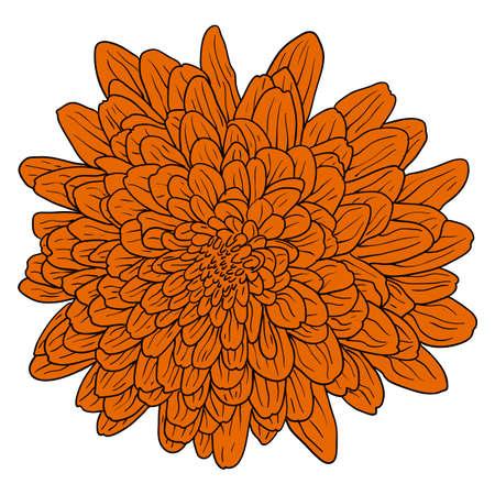 Bello schizzo di colore, fiore della dalia su una priorità bassa bianca. Vettoriali