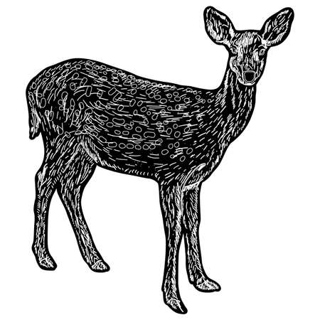 Silhouette of the deer on a white background.