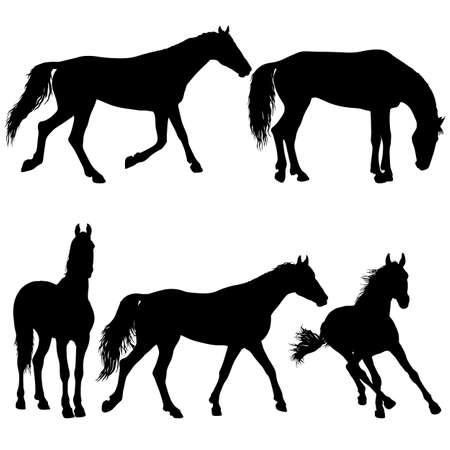 Définir la silhouette animale de l'illustration du cheval mustang noir.