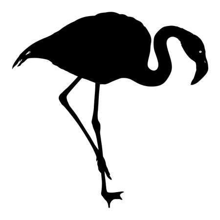 Silhouette bird flamingo on a white background.