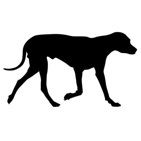 Dunker dog silhouette on a white background.