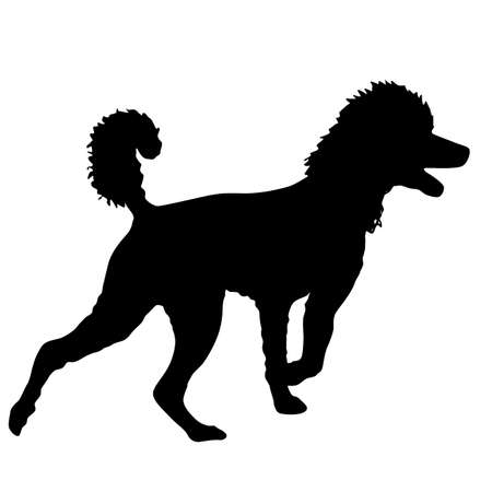 Poodle dog silhouette on a white background.