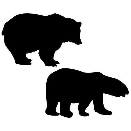 Silhouette of a white and brown bear on a white background.