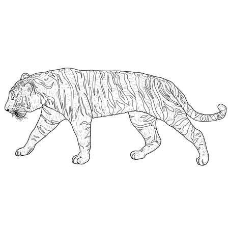 Sketch beautiful tiger on a white background. Standard-Bild - 133437598