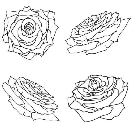 Beautiful set sketch of a rose flower on a white background. Ilustrace