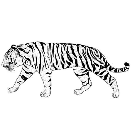 Sketch beautiful tiger on a white background. Standard-Bild - 133437773