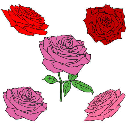 Beautiful set sketch of a rose flower on a white background. Stock Illustratie