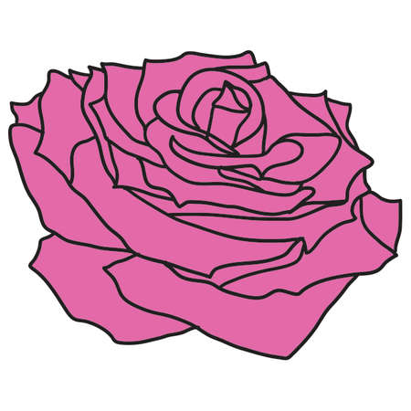 Beautiful sketch red of a rose flower on a white background.