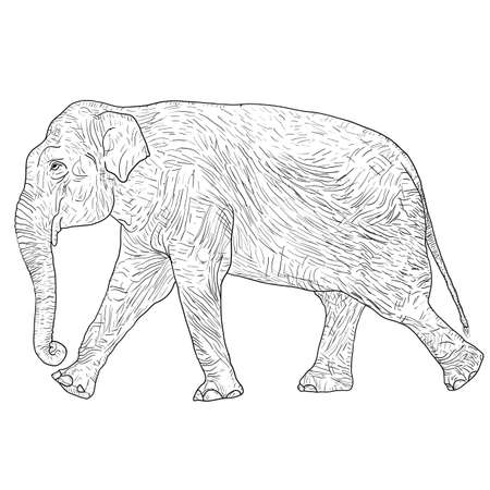 Sketch large African elephant on a white background. Stock Illustratie