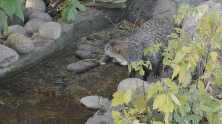 Cute young raccoon on the stone in the warm summer day at the forest.