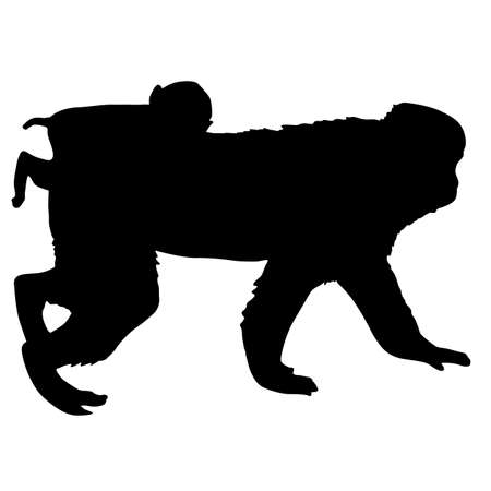 Silhouette of the japanese macaque on a white background.