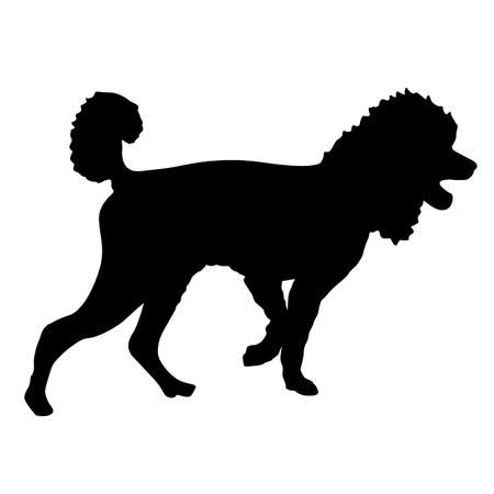 Poodle dog black silhouette on white background. Ilustracja
