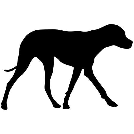 Doberman pinscher dog black silhouette on white background.