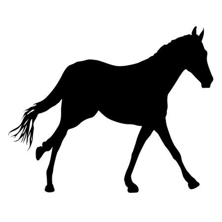 Silhouette of black mustang horse on white background.