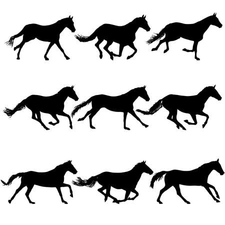 Set silhouette of black horse on white background.