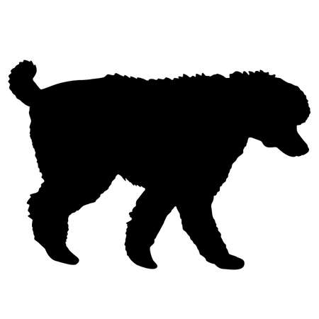 Poodle dog black silhouette on white background. Çizim