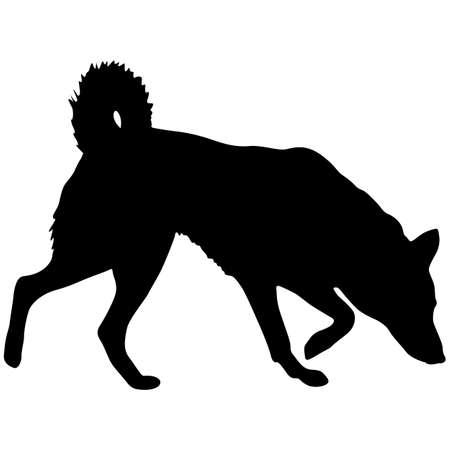 Shepherd dog black silhouette on white background. Çizim