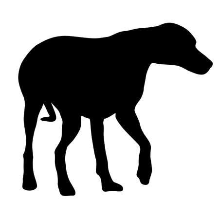 Doberman pinscher dog black silhouette on white background. Ilustración de vector