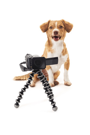 Portrait of dog with camcorder on tripod isolated over white background photo