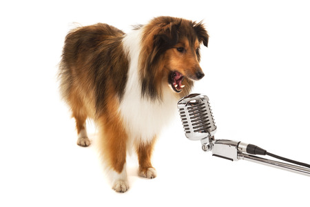 Portrait of dog singing on vintage microphone isolated over white background photo