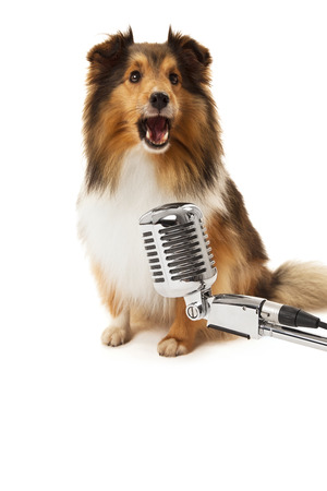 Portrait of dog in front of vintage microphone isolated over white background photo