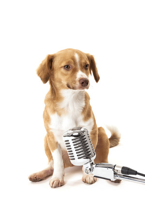 Portrait of cut dog in front of vintage microphone over white background photo