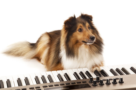 Portrait of dog playing music on keyboard over white background photo