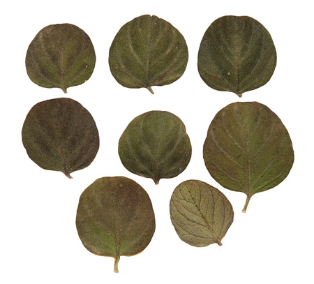 roughage: dried fall leaves of plants, flowers and branches isolated elements, white, background for scrapbook, wooden planks, object, roughage autumn leaf, small green leaves