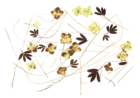 roughage: bouquet of dried leaves on watercolor paper, fall leaf, wooden planks, object, roughage autumn leaf, desiccated leaves of plants collected in the flavour and pasted on, exsiccated Stock Photo