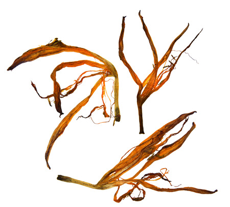 applique flower: bizarre curved extruded dried lily petals Stock Photo