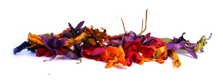 cranesbill: geranium, petunia, dry delicate flowers, leaves and petals of pressed, iris, orchid marigolds, Aquilegia pelargonium, isolated on white background scrapbook Stock Photo