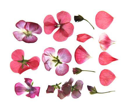 Pressed multicolour geranium set perspective. Dry delicate isolated flowers and petals of pelargonium Stock fotó